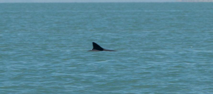 Programa para la conservación de la vaquita marina: único en el mundo