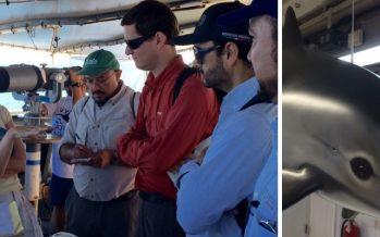EUA ofrece apoyo tecnológico para el proyecto de protección de la vaquita marina