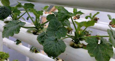 Llevarán a cabo Segundo Encuentro Nacional de Agricultura Biodinámica, en Uruapan