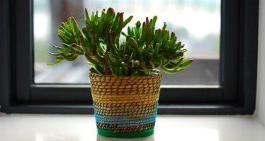 5 plantas que la NASA recomienda para purificar el aire de tu casa