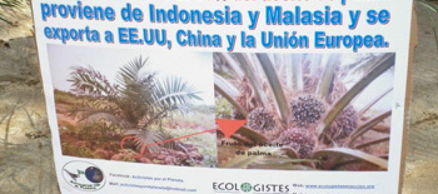 Aceite de palma y sus consecuencias ambientales