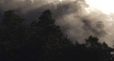 México puede perder su bosque de niebla antes de 2080