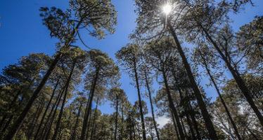 Proteger derechos forestales de indígenas de AL es benéfico