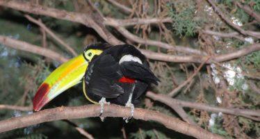 Luego de la matanza de aves, un árbol de plástico