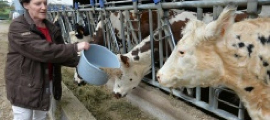 Dar más hierba a las vacas, una forma de combatir el calentamiento