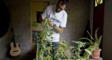 Juez declara inconstitucional la criminalización de posesión simple de mariguana