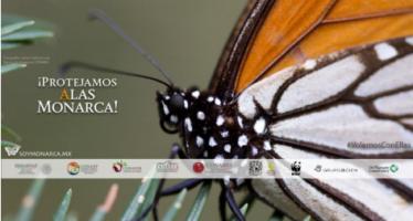 """Mariposa monarca llega a México, captura su imagen y súbela a """"NaturaLista"""""""
