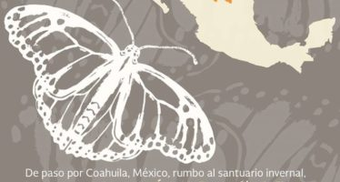 Mariposa monarca, de paso por Coahuila