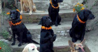 Nepal celebra el día anual que homenajea a los perros y es simplemente genial
