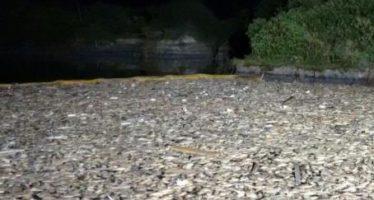 40 toneladas de peces muertos en las costas de Matamoros