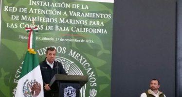 Manntendrán apoyos al Programa Integral de Recuperación de la Vaquita Marina