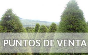 Puntos de venta de árboles de Navidad