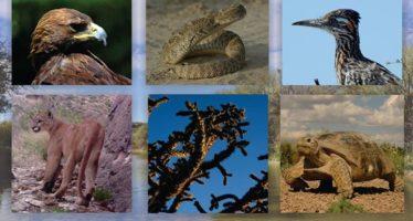 Reserva de la Biósfera Mapimí celebra su 36 Aniversario
