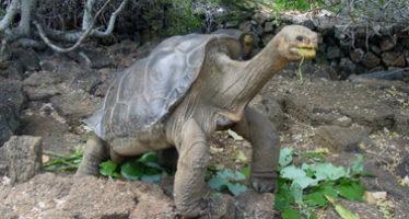 Islas Galápagos logra eclosión de huevos de tortugas