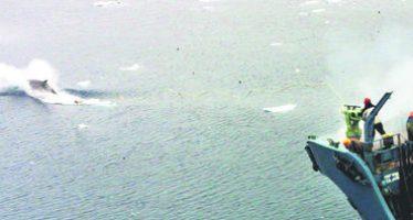 El cambio climático, azote para las ballenas