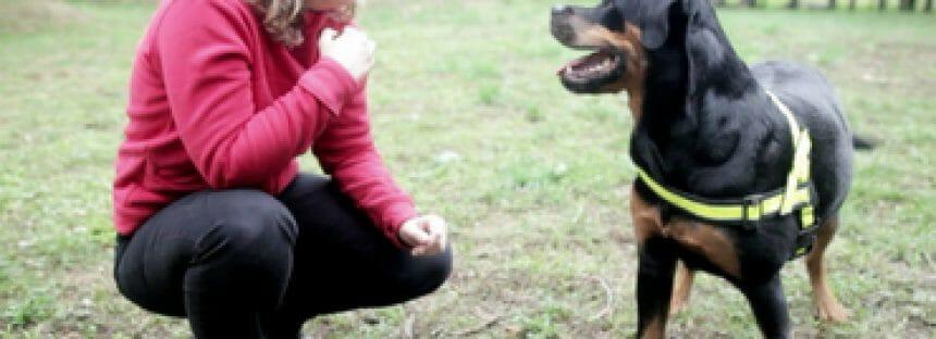 Los perros pueden percibir alegría o enojo de los humanos