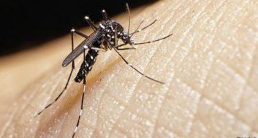 Aumenta número de países con casos de Zika