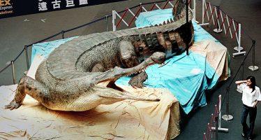 Descubren en Túnez fósiles del  mayor 'cocodrilo' marino