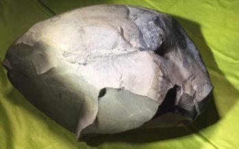 """Descubren en Colombia el fósil de un pez """"único"""" de 130 millones de años"""