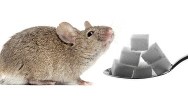Las adicciones transforman el cerebro hasta que no es capaz de abandonarlas