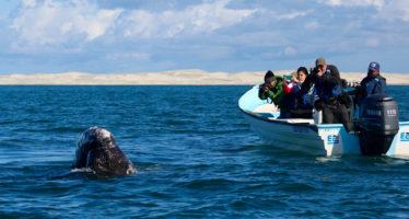 En esta temporada de avistamiento de ballenas atiende los lineamientos para su observación