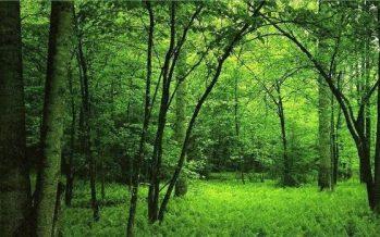 Así aseguran los árboles su supervivencia