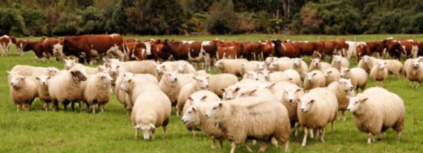 17% de las razas de animales de cría en el mundo se encuentra en peligro de extinción