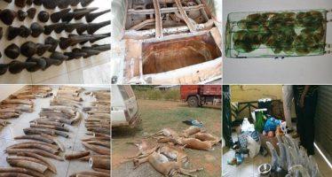 Golpe al tráfico ilegal de productos silvestres