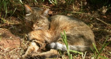 La agricultura favoreció la aparición de los gatos domésticos en China, hace 5.000 años