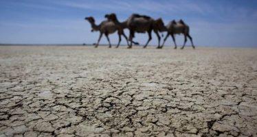 Prevén una negativa combinación de dos fenómenos climáticos que influyen en la absorción de CO2