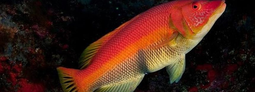 Los gobiernos del Atlántico Nordeste ignoran al 79% de peces amenazados de extinción