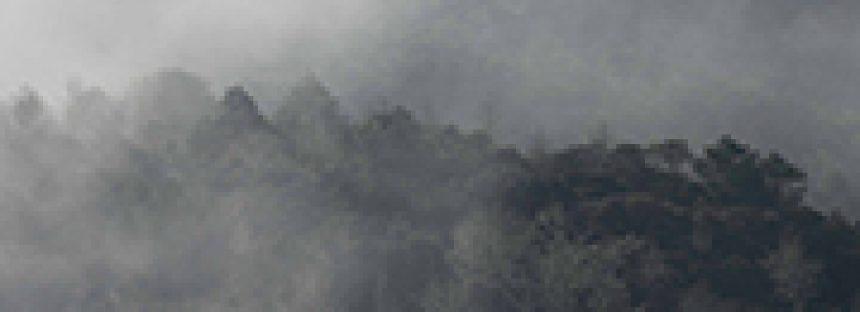 Protege Grupo Ecológico Sierra Gorda bosques de niebla que es hábitat del jaguar (Panthera onca)