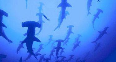 Tiburones: cinco superpoderes que los convierten en los héroes del océano