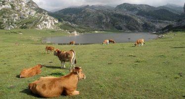La diversidad genética del ganado, clave para alimentar a un planeta más caliente e inhóspito