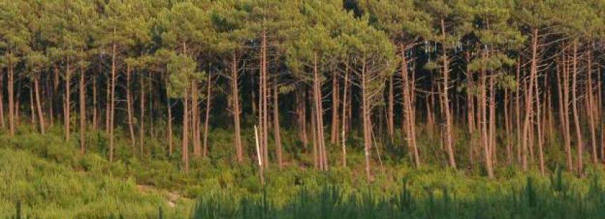 Cuando se trata del cambio climático, no todos los bosques son iguales