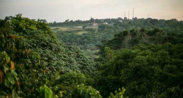 El bosque del Zika en Uganda, lugar de nacimiento del virus