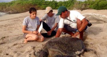 Inicia temporada de anidación de tortugas marinas en Galápagos