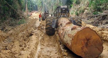 Exigencia a la Unión Europea: Prohibir la importación de madera ensangrentada de la República Centroafricana