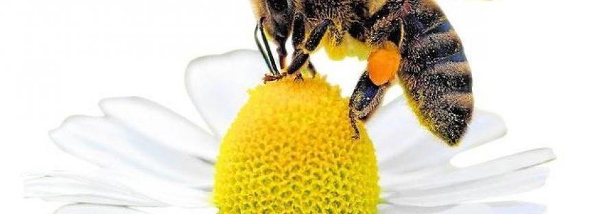 ¿Controles fronterizos para las abejas?