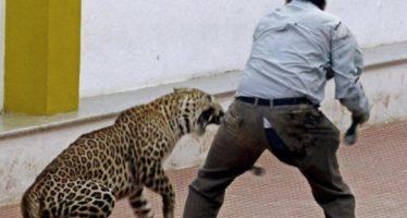 Cierran 130 escuelas por temor a leopardos en India