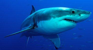 22 especies de tiburones declaradas en peligro de extinción