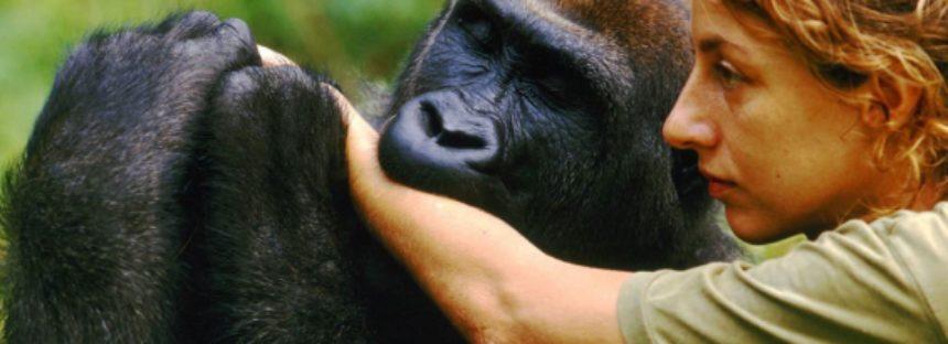 Los humanos y los gorilas comparten un linaje común