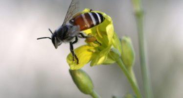 En peligro extinción el 40% de los polinizadores invertebrados