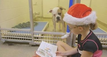 Un grupo de niños lee cuentos a los perros abandonados de un refugio de Missouri para facilitar su adopción