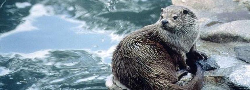 Aumentan las «colonizaciones asistidas» de especies
