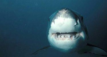 Récord de ataques de tiburón registrados en 2015