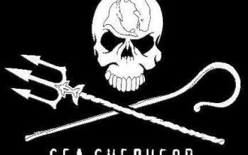 Sea Shepherd finds 3 dead vaquitas in 3 weeks