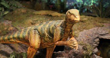 Viaje a la 'zona cero' de los dinosaurios: Perforarán el cráter del asteroide que los extinguió