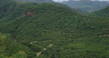 Cero tolerancia a tala ilegal en Michoacán