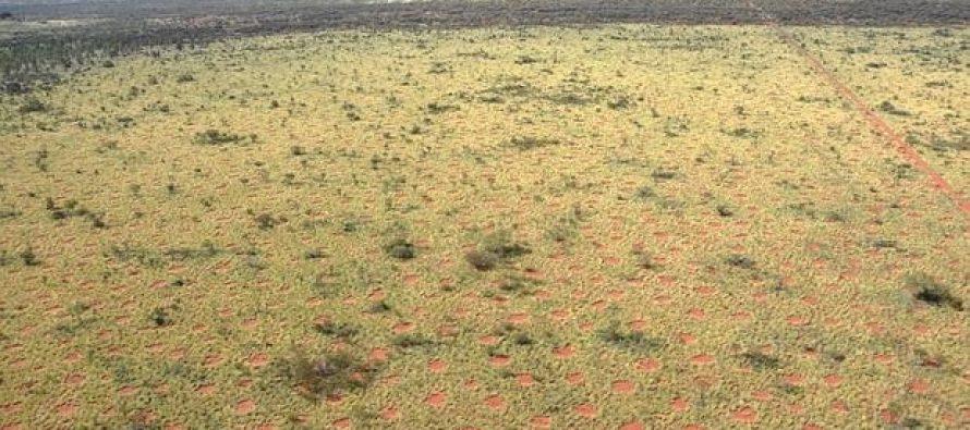 Los misteriosos círculos de Namibia se repiten en Australia